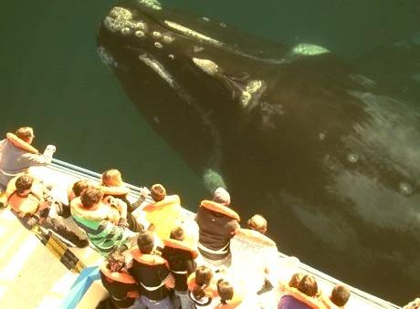 Whale Watching, San Diego, California