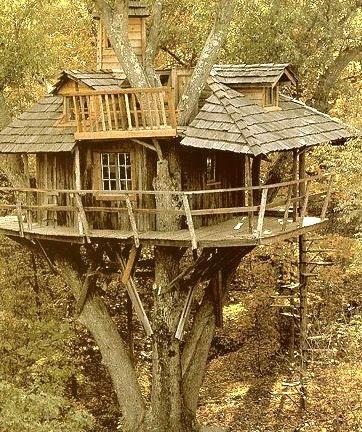 Inhabited Tree House, Marin, California