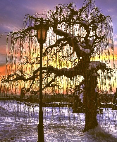 Sunset Tree, Belgrade, Serbia