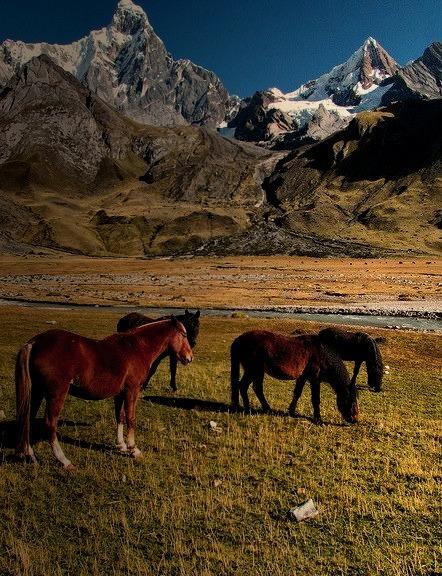 Horses in front of Jirishanca, Cordillera Huayhuash, Peru