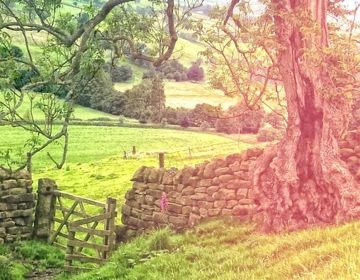 Nidderdale, Yorkshire Dales, England