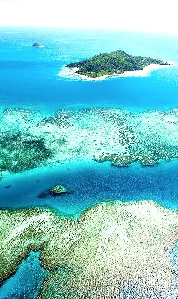 The coral reef near Castaway Island, Fiji