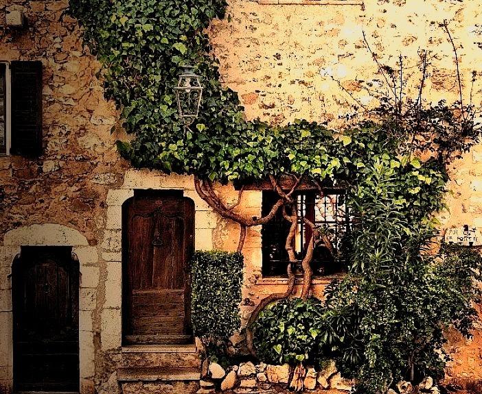 Vines, St. Paul de Vence, France photo via pixdaus