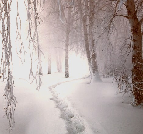 Snow Path, Finland