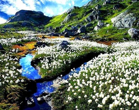 Cotton fields in Sogn og Fjordane, Norway